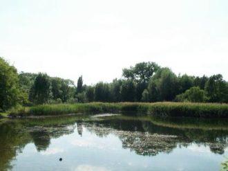 Teilungssee_in_Petershagen
